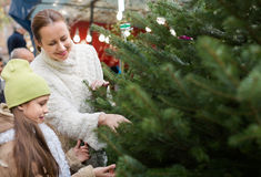 Family choosing Christmas tree at market Stock Photo
