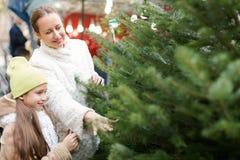 Family choosing Christmas tree at market Stock Image