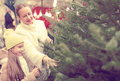 Family choosing Christmas tree at market Stock Images