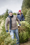 Family with Christmas tree on a farm. Man dragging fresh spruce at cut your own Christmas tree farm with his daughter in background royalty free stock photography
