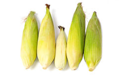 Family of corns Stock Photos
