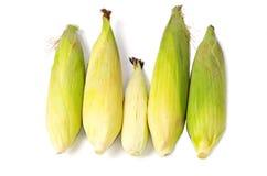 Family of corns Stock Photos