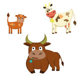 Family of cows. Farm animals , cow, bull and calf Stock Image