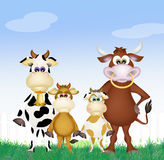 Family of cows in the farm Royalty Free Stock Photos