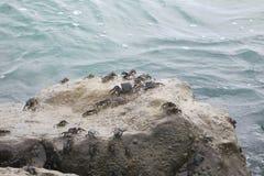 Family of crabs stock photos