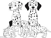 Family of Dalmatian dogs Stock Image