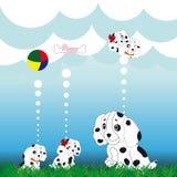 Family dalmatian Stock Photo