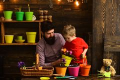 Family day. Greenhouse. Father and son. Fathers day. Flower care watering. Soil fertilizers. happy gardeners with spring. Flowers. bearded men and little boy stock photo