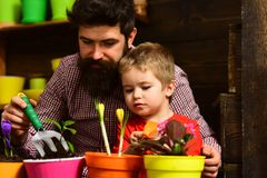 Family day. Greenhouse. Father and son. Fathers day. Flower care watering. Soil fertilizers. happy gardeners with spring. Flowers. bearded men and little boy royalty free stock photo