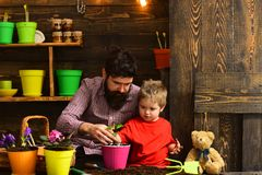 Family day. Greenhouse. Father and son. happy gardeners with spring flowers. Flower care watering. Soil fertilizers. Bearded men and little boy child love royalty free stock photo