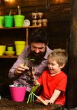 Family day. Greenhouse. Father and son. happy gardeners with spring flowers. Flower care watering. Soil fertilizers. Bearded men and little boy child love royalty free stock photography