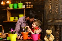 Family day. Greenhouse. happy gardeners with spring flowers. Father and son. Fathers day. Flower care watering. Soil. Fertilizers. bearded men and little boy stock image