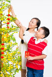 Family decoration Royalty Free Stock Photography