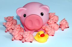 Family with a difference. Family with pig parent and piglets and one different duck Stock Photo