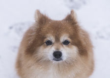 亲爱的Family Dog 库存照片