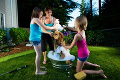 Family Dog Bath Royalty Free Stock Photo