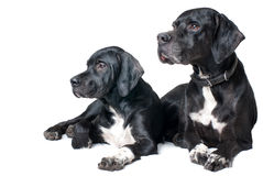 Family dog, father and son Stock Image