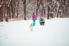 Family with dog husky Stock Photography