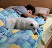 Family dog sleeping with teen girl on bed. Family dog sleeping in bed with teen girl in background Stock Image