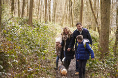 Family and dog walk in a wood, boy turning round, close up Stock Photos