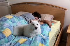 Family dog watching out for teen girl while she is sleeping Royalty Free Stock Photos