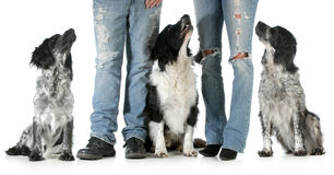 Family with dogs Stock Image