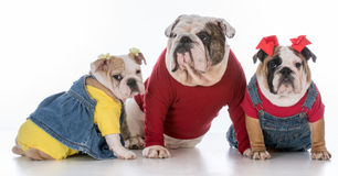 Family of dogs Stock Photo
