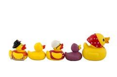 Family duck Royalty Free Stock Photos