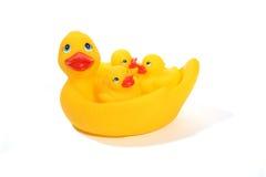Family of Ducks Royalty Free Stock Photo