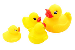 Family of ducks. Four ducklings representing a family with the smaller section of his mother and brothers cut off and isolated Stock Image