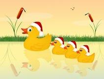 Family of ducks at Christmas Royalty Free Stock Photos