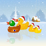 Family of ducks at Christmas Royalty Free Stock Photography