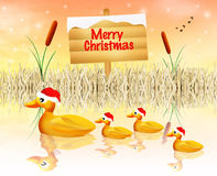 Family of ducks at Christmas Stock Image