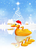 Family of ducks at Christmas Stock Images