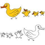 Family of Ducks Royalty Free Stock Photos