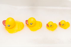Family of ducks in a line Royalty Free Stock Photos