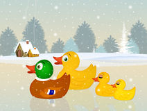 Family of ducks in winter Royalty Free Stock Photos