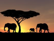 Family of elephant. Group of elephant in africa Royalty Free Stock Image