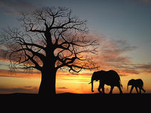 Family of elephant Royalty Free Stock Image