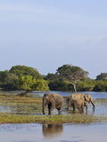 A family of elephants Royalty Free Stock Photography