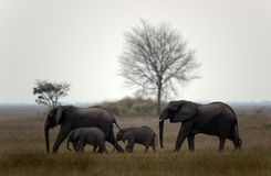 Family of elephants. Royalty Free Stock Photography