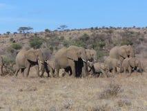 Family of elephants Stock Photos