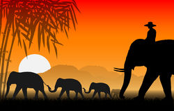 Family of elephants. Illustration Family of elephants., And the mahout sat on the elephants neck. Walking at sunset Stock Photo