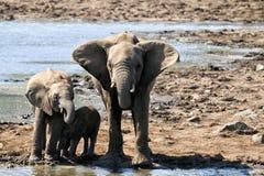 A family of elephants Royalty Free Stock Photo