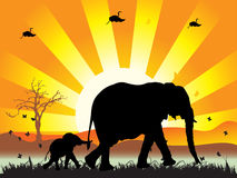 Family of elephants on nature  Stock Photo