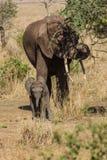 Family of elephants. Photo taken during the safari in Serengeti National park. Tanzania stock image
