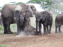 A family of elephants taking a dust bath Stock Photography