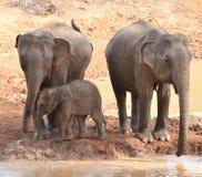 Family of Elephants Washing Royalty Free Stock Photo