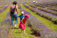 Family in a lavender field Royalty Free Stock Image