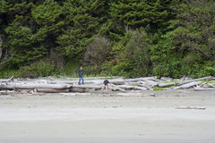 Family exploring driftwood on Beach royalty free stock images